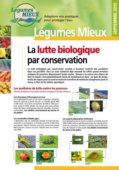 Fiche Légumes Lorraine n°5